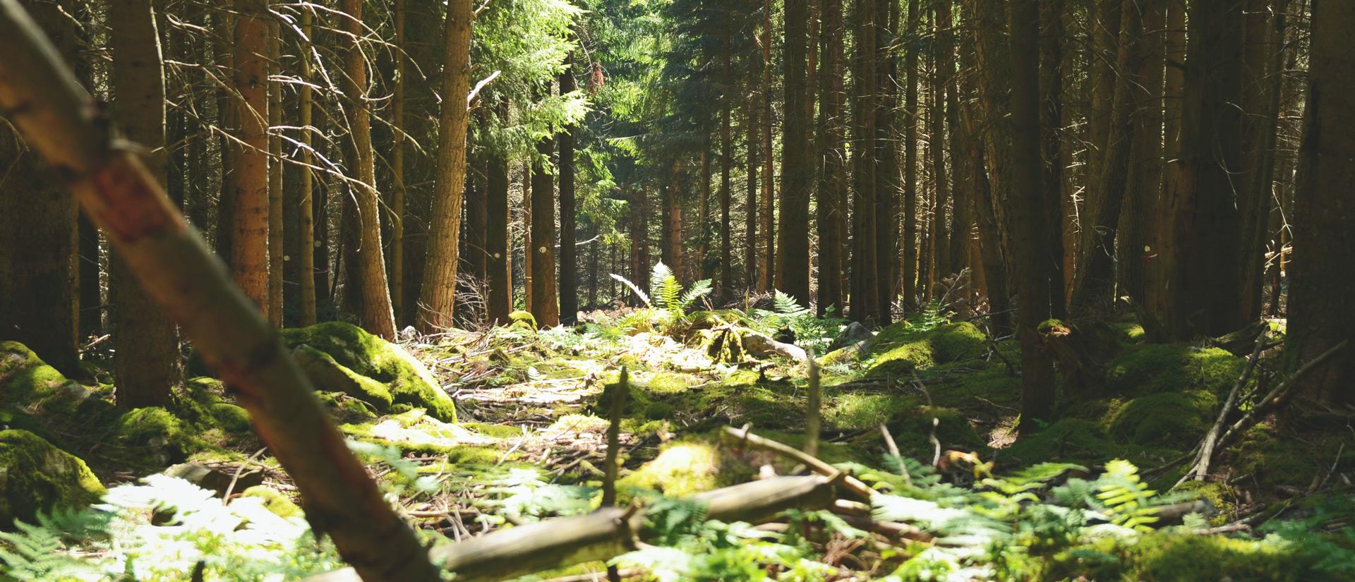 Camping Clos De La Chaume: Bos Vosges